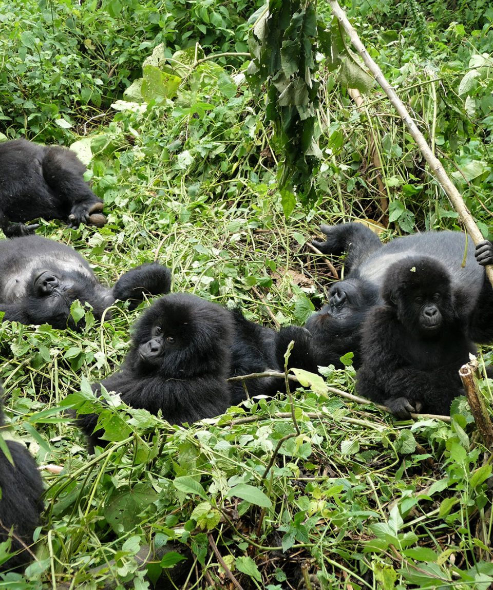uganda_dest