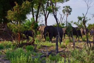IMGP7942 - 12.11. Fahrt durch das Okavango Delta nach Savuti