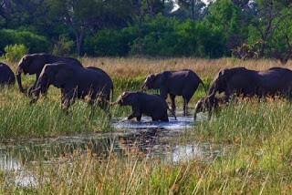 IMGP7948 - 12.11. Fahrt durch das Okavango Delta nach Savuti