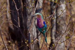 IMGP7959 - 12.11. Fahrt durch das Okavango Delta nach Savuti