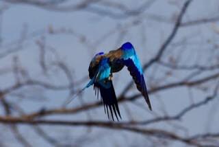 IMGP7968 - 12.11. Fahrt durch das Okavango Delta nach Savuti