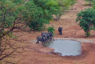IMGP8001 - 12.11. Fahrt durch das Okavango Delta nach Savuti