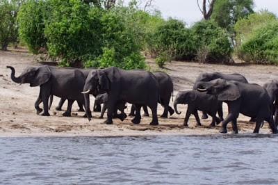 IMGP8168 - 15.11. Am Chobe River