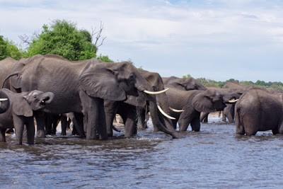 IMGP8170 - 15.11. Am Chobe River