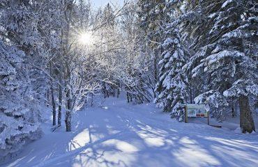 Winter im Bayrischen WaldFoto ©Bayern.by-Gert Krautbauer
