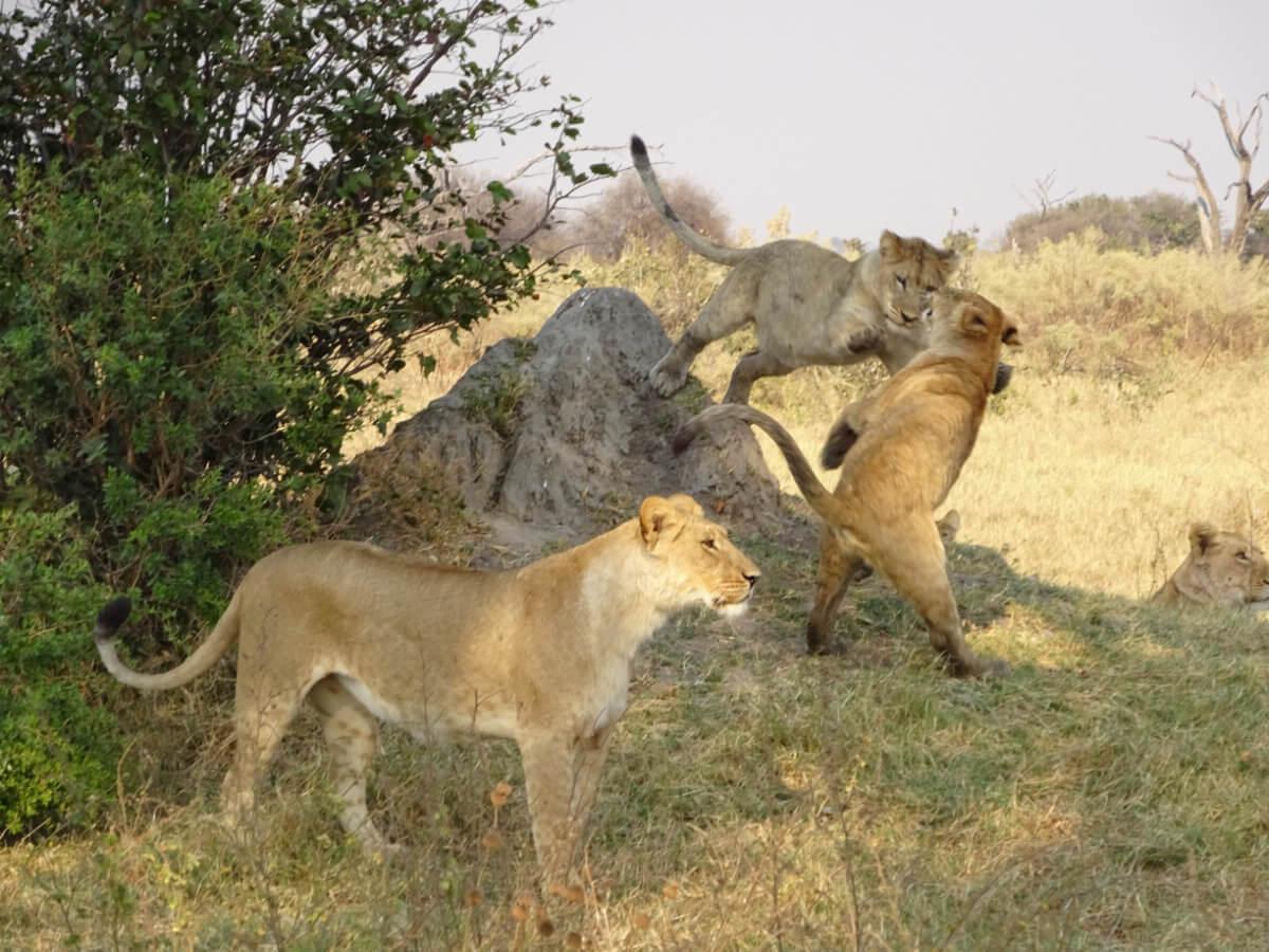 DSC02227 Lisa Heintzkill - Abenteuer Botswana