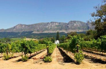 Panorama of Cape Dutch homestead on a wine farm