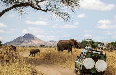 shutterstock_727902637-Safari