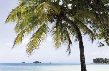 Paradise beach, Praslin island, Seychelles