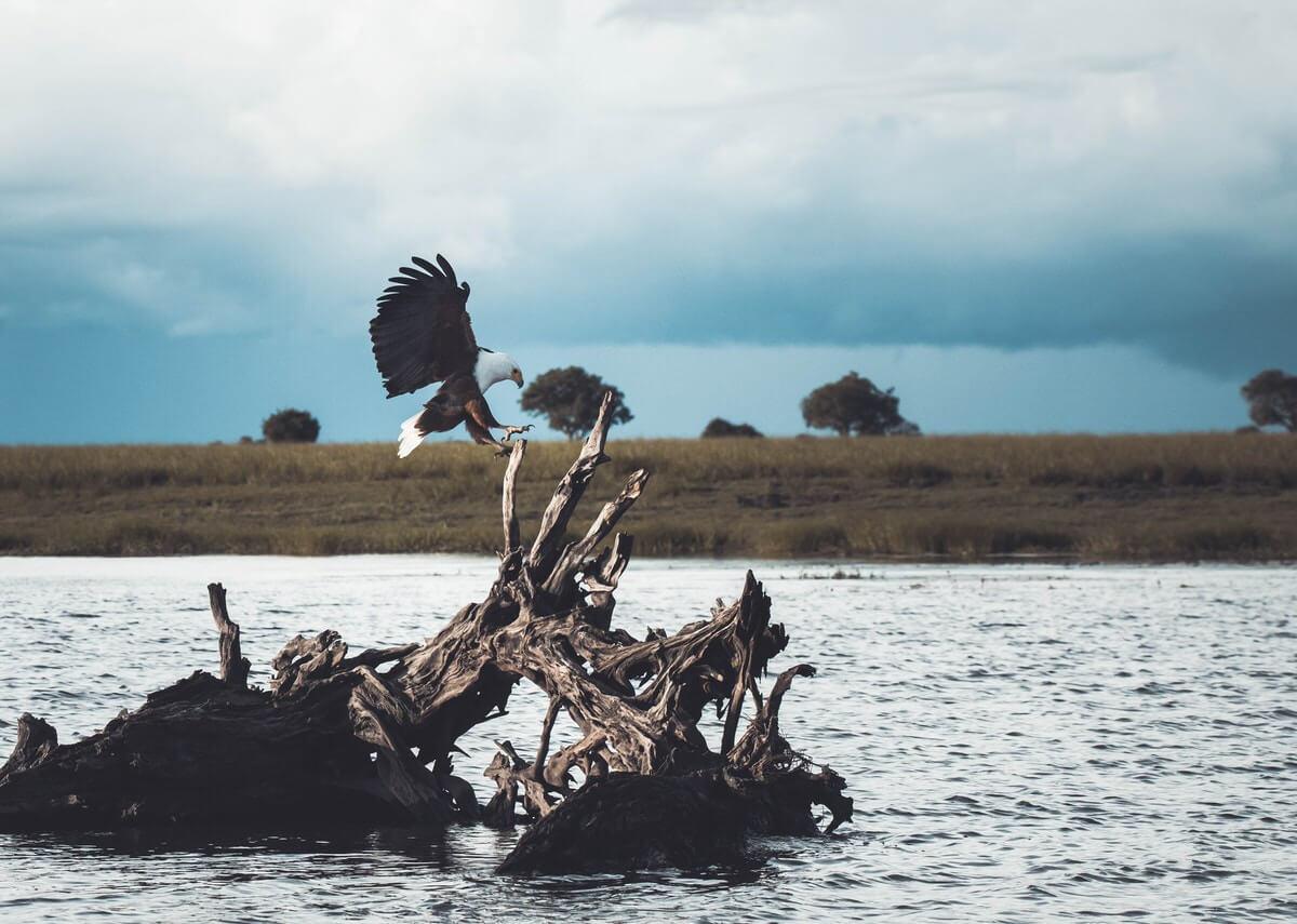 geran de klerk 187797 unsplash - Botswana – Zwischen Wüsten und Wasser