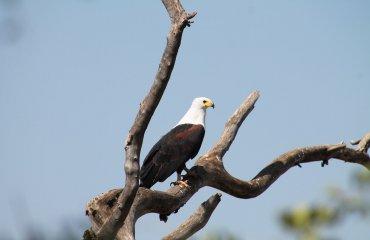 eagle-950056_1920