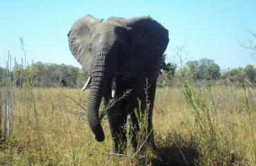 elephant-719742_1920