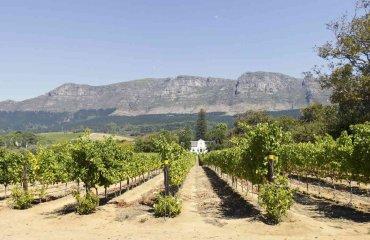 Wein Gehöft Nähe Kapstadt - awiebadenhorst Fotolia