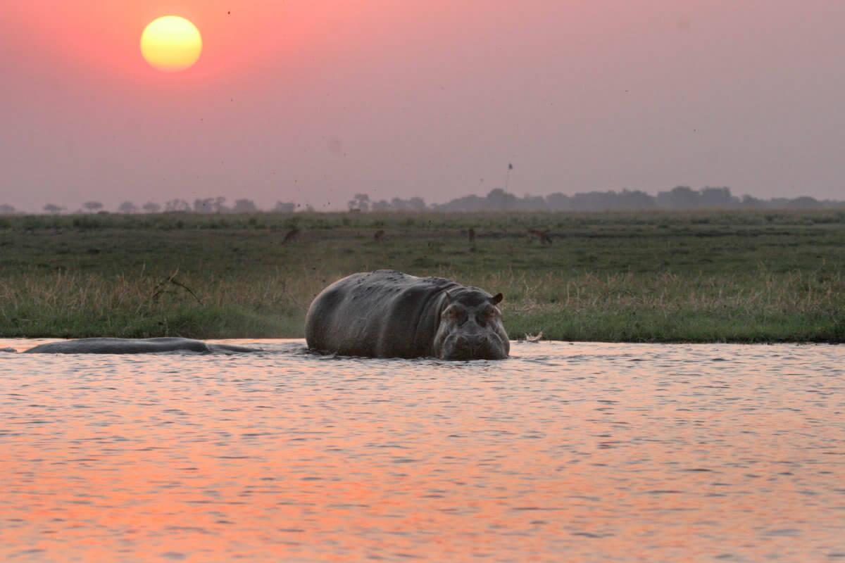 IMG 4780 Chobe Safari Lodge - Namibia und Botswana hautnah