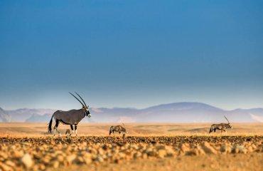 shutterstock_1124427065 Namibwüste