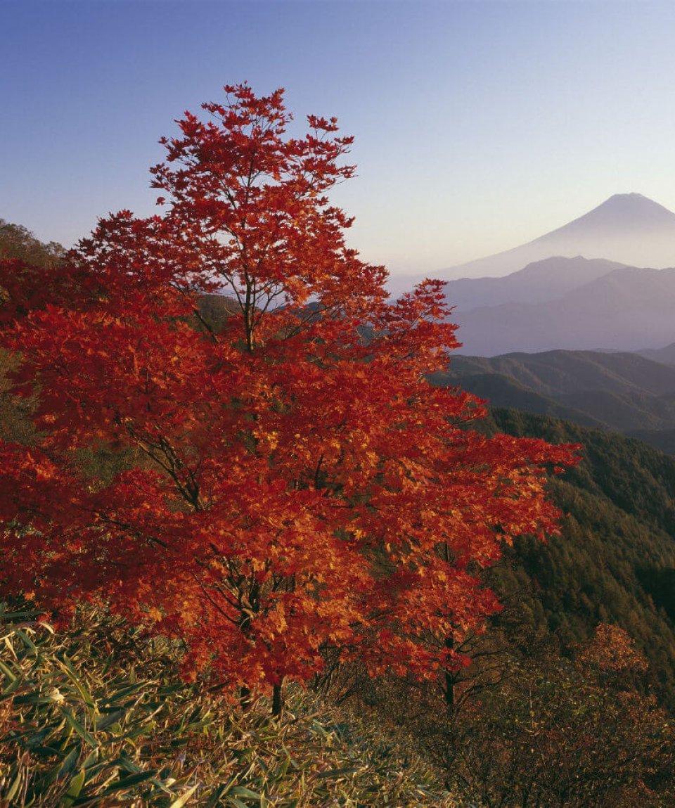 Herbstlaubfärbung Fuji 1