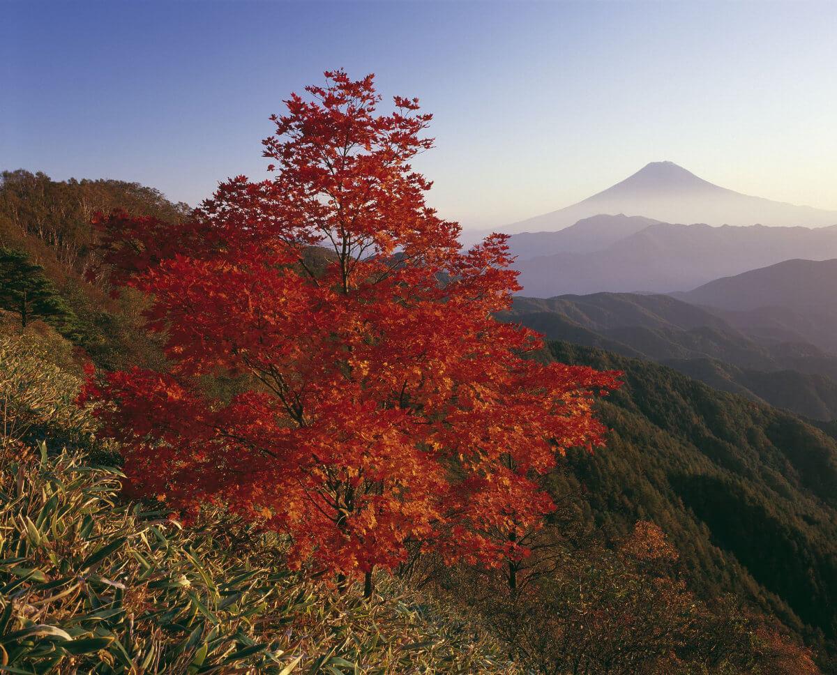 Herbstlaubfärbung Fuji 1 - Im Land der aufgehenden Sonne - Die Höhepunkte Japans