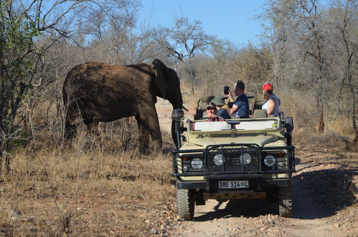 CS and elephant 1 - Bush Lover Safari im Krüger Nationalpark