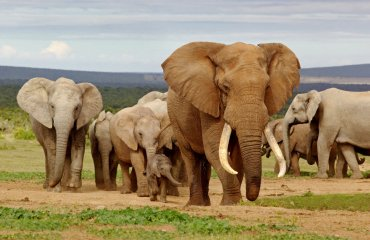 shutterstock_119196472 Addo Elephant NP