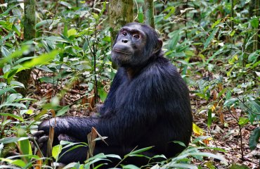 shutterstock_638754025 Kibale Forest
