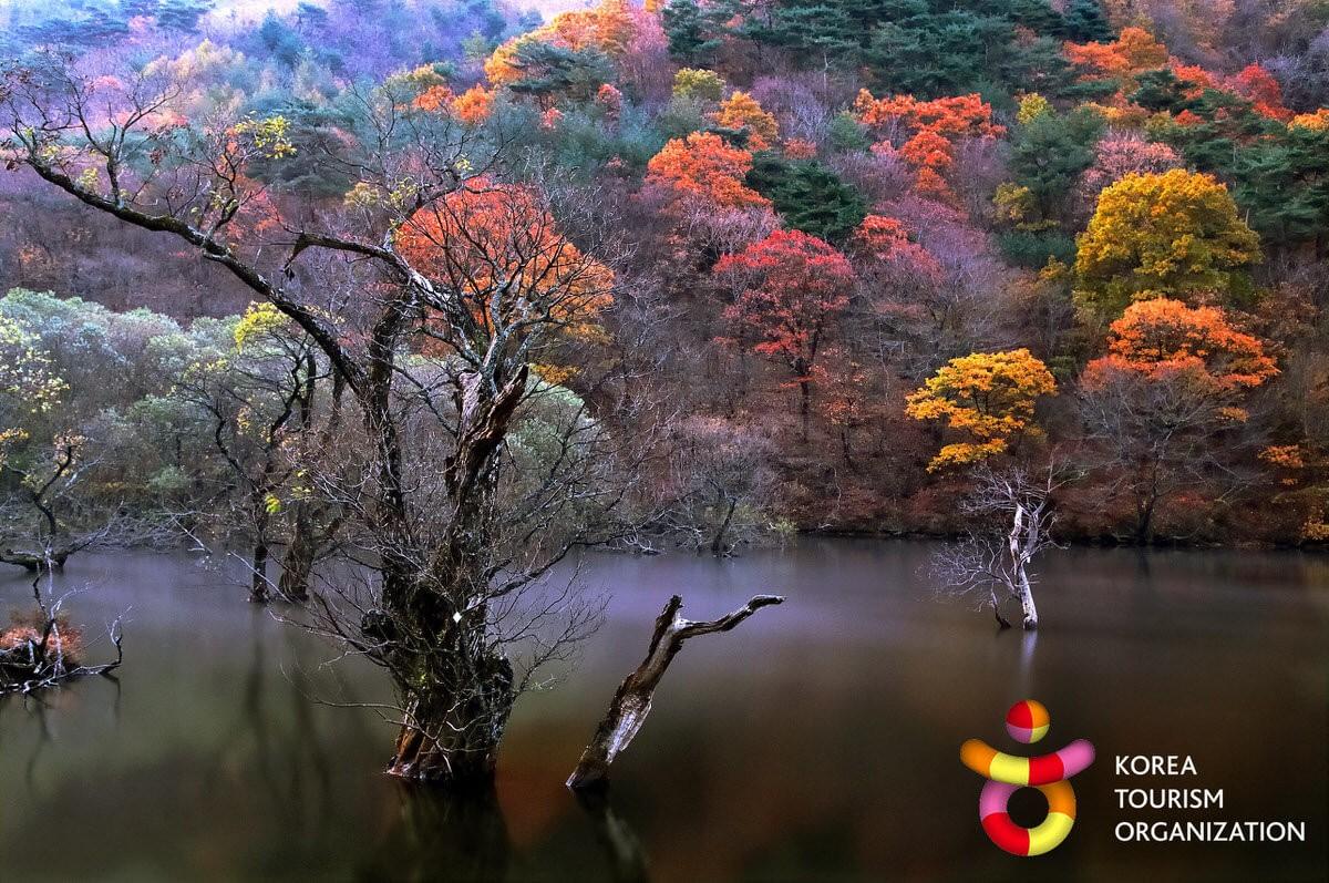 Kor natur 38201350700160k fva - Das Korea Projekt