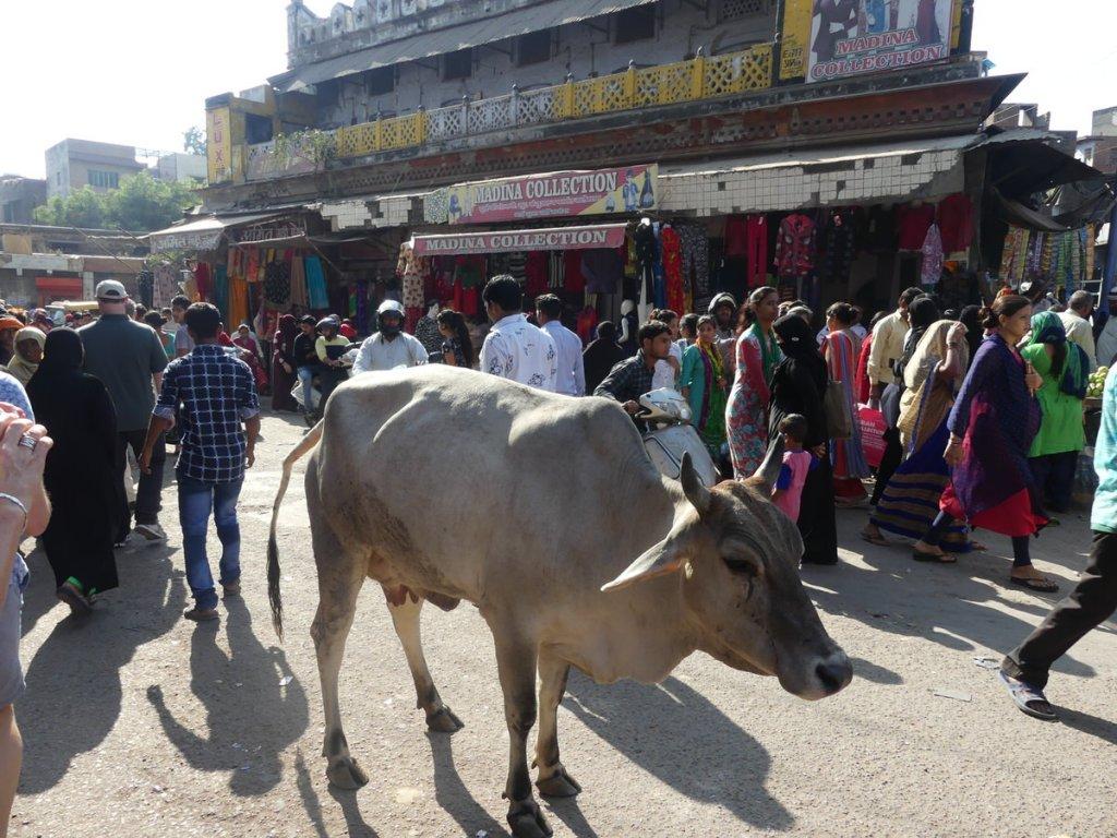 P1010564 1024x768 - Farbenfrohes Indien - Reisebericht zu unserer Rundreise