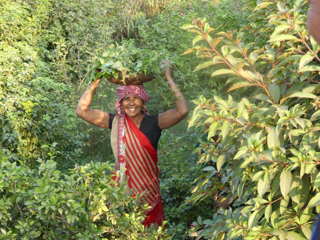 P1010680 1024x768 - Farbenfrohes Indien - Reisebericht zu unserer Rundreise