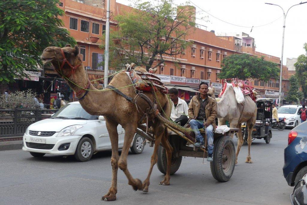 P1010965 1024x684 - Farbenfrohes Indien - Reisebericht zu unserer Rundreise