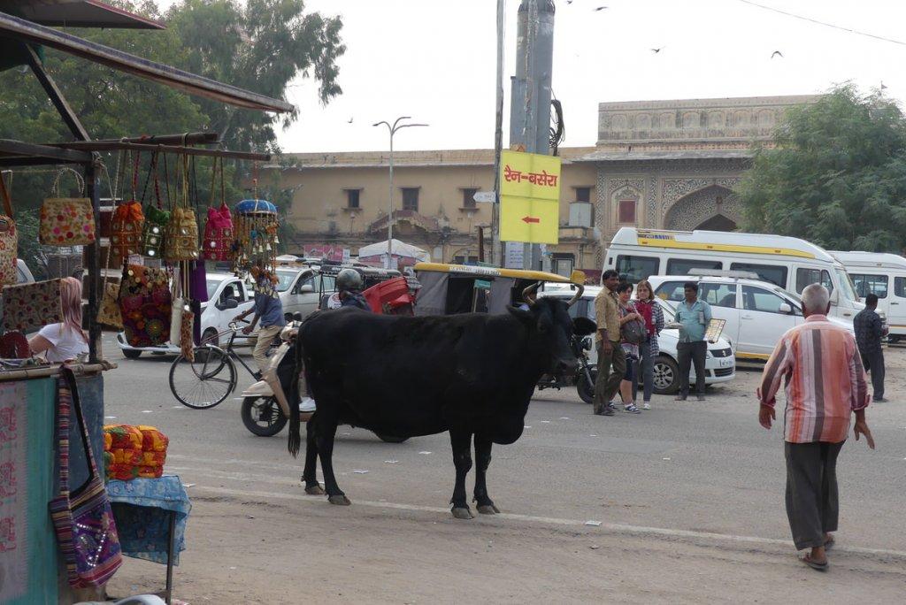 P1010974 1024x684 - Farbenfrohes Indien - Reisebericht zu unserer Rundreise