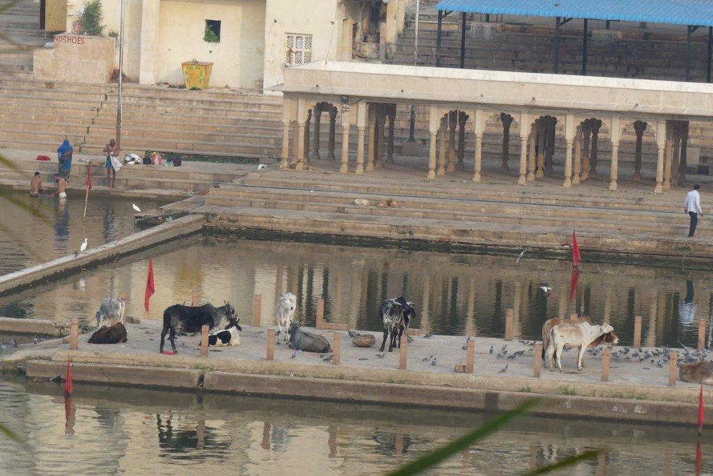 P1020193 1024x684 - Farbenfrohes Indien - Reisebericht zu unserer Rundreise