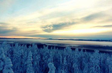 Forrest in Lapland_copyright FlyCar