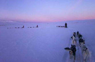 staffan_widstrand-dog_sledding-90