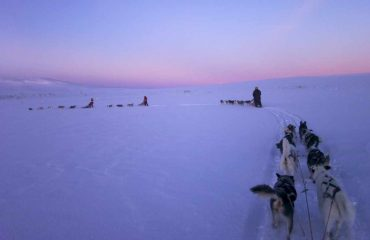 staffan_widstrand-dog_sledding-90